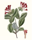 Roseate Blooms V Art Print