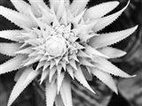 Botanical Under Cold Moonlight II Art Print
