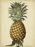 Brookshaw Antique Pineapple I Art Print