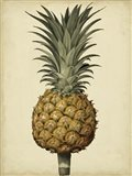 Brookshaw Antique Pineapple II Art Print