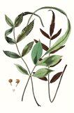 Fern Foliage II Art Print