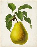 Antique Fruit VII Art Print