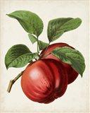 Antique Fruit X Art Print