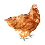 Wild Chicken I Art Print
