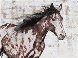 Winner Horse III Art Print