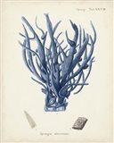 Antique Coral in Navy V Art Print