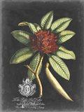 Royal Foliage III Art Print