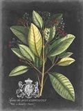 Royal Foliage IV Art Print