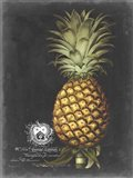 Royal Brookshaw Pineapple I Art Print