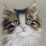 Kitten Portrait II Art Print