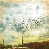 Birds on Wires V Art Print