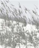 Lush Dunes III Art Print