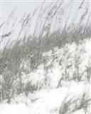 Lush Dunes IV Art Print
