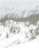 Lush Dunes V Art Print