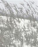 Lush Dunes VI Art Print