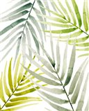 Shady Palm I Art Print