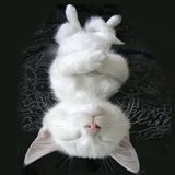 Cat Yoga III Art Print