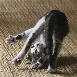 Cat Yoga IV Art Print