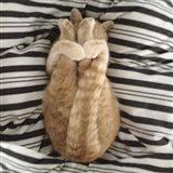 Cat Yoga IX Art Print