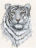 White Tiger II Art Print