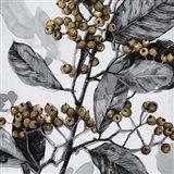 Holly Shadow I Art Print