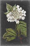 Dramatic White Flowers III Art Print