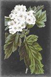 Dramatic White Flowers IV Art Print