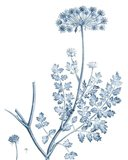 Antique Botanical in Blue V Art Print
