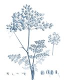 Antique Botanical in Blue VI Art Print
