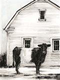 Belted Galloway I Art Print
