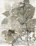 Birch Leaves I Art Print