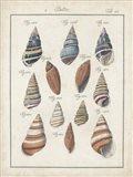 Antique Shell Pair I Art Print