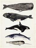 Whale Chart I Art Print