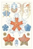Sealife Species I Art Print