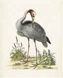 Antique Heron & Cranes I Art Print