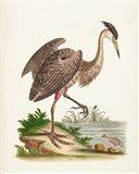 Antique Heron & Cranes III Art Print