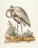 Antique Heron & Cranes IV Art Print