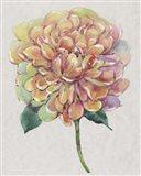 Multicolor Floral I Art Print