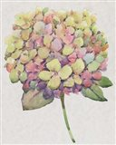 Multicolor Floral II Art Print