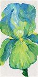 Iris Bloom in Green I Art Print