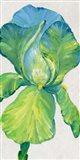 Iris Bloom in Green II Art Print