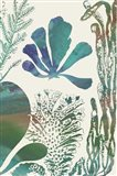 Aquatic Assemblage I Art Print