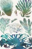 Aquatic Assemblage II Art Print