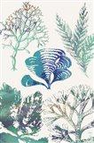 Aquatic Assemblage III Art Print