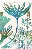 Aquatic Assemblage IV Art Print