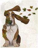 Basset Hound Windswept and Interesting Art Print