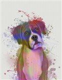 Boxer 1 Portrait Rainbow Splash Art Print