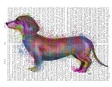 Dachshund Rainbow Splash 1 Art Print
