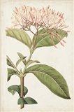 Antique Botanical Collection VI Art Print