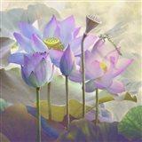 Lotus Sanctuary I Art Print